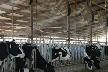 Hệ thống phun sương làm mát chuồng trại chăn nuôi